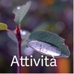 150_attivita