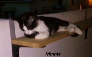 Ani-Minnie-mlau